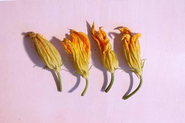 ventiventi-fioridizucca